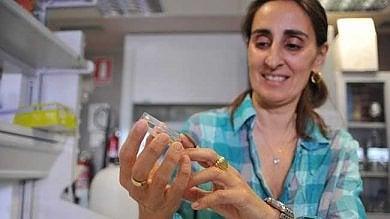 Biologa italiana scopre per caso il bruco che può mangiare la plastica