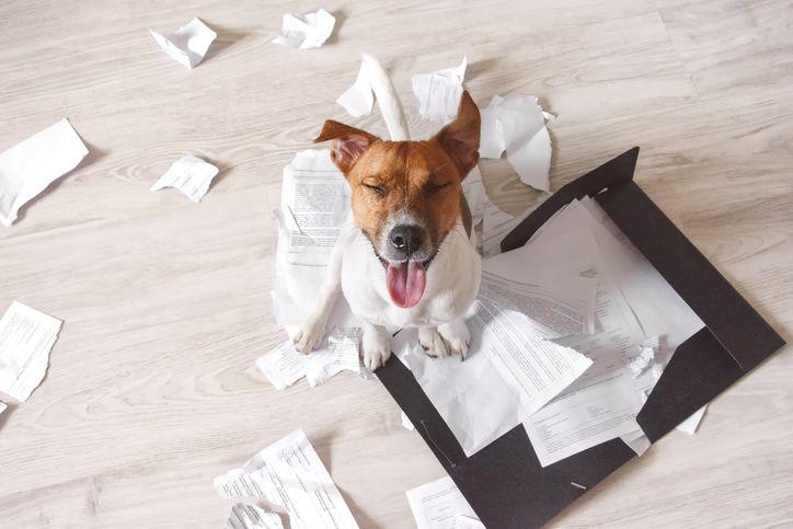 Dogo Argentino e Rottweiller: i cani più costosi da assicurare