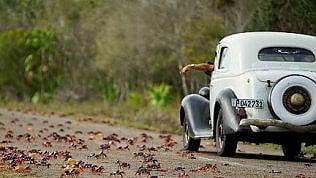 L'invasione dei granchi rossiIn migliaia per le strade di Cuba
