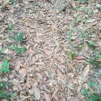 C'è un serpente tra le foglie. Riuscite a trovarlo? Mettetevi alla prova