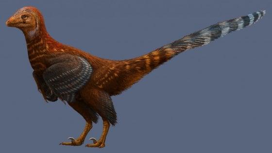 Scoperto dinosauro col piumaggio degli uccelli moderni