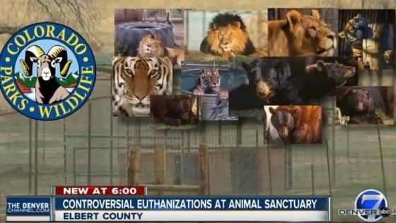 """Colorado, riserva abbatte tutti i suoi animali. """"Non avevano scampo"""""""