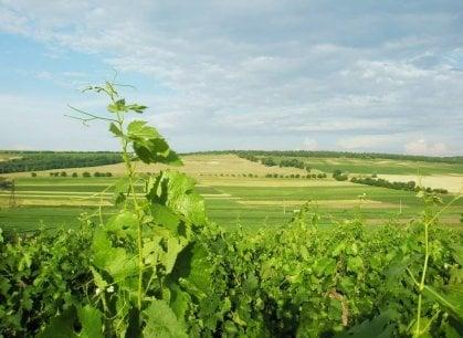 Moldavia, la guerra del vino tra Russia ed Europa