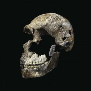 Svelati i segreti di Homo naledi, l'ominide che incontrò i moderni esseri umani