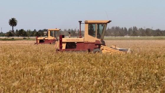 Agricoltura: +20% emissioni di gas serra dal 1990 ad oggi