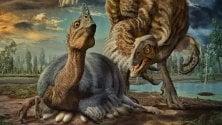 Dall'uovo di dinosauro  le prove di una nuova specie di giganti