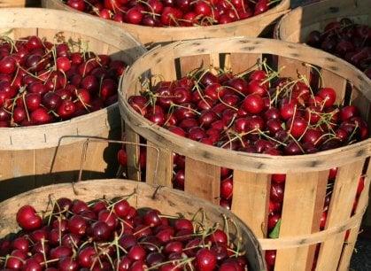 Un mondo in rosso: la ciliegia, 22 varietà per un frutto che sa di bella stagione