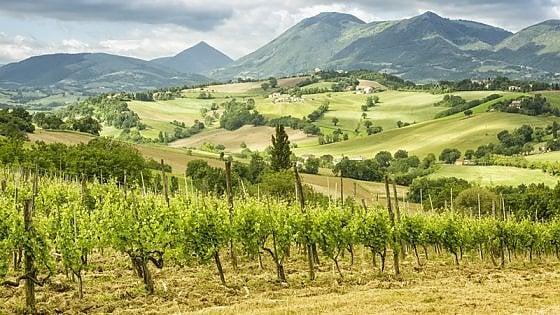 Terroir Marche Festival: a Macerata si festeggiano i vini bio (con un occhio alla Borgogna)
