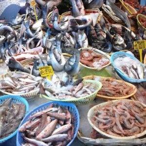 Occhio ai pericoli in pescheria