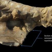 Un morso da 3.600 chili: così il T. rex stritolava le sue prede