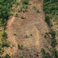 Così il traffico di cocaina distrugge le foreste del Centro America