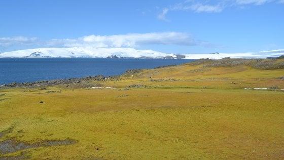 Muschi al posto dei ghiacci, l'allarme: ''L'Antartide diventa verde''