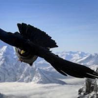 In Europa in 10 anni +70% di specie di uccelli a rischio