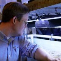I coralli da laboratorio per salvare la Grande barriera