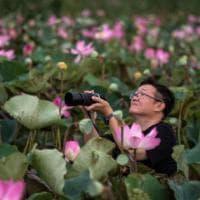 Thailandia, un lago in rosa: dopo 10 anni tornano i fiori di loto nel Parco