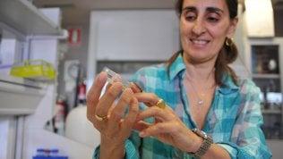 La scienziata del bruco mangiaplastica è senza lavoro. ''Tornerei, se avessi proposte''