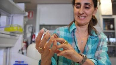 La scienziata del bruco mangiaplastica senza lavoro. ''Tornerei, se avessi proposte''