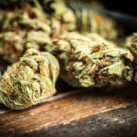 Usa, 100 grammi di marijuana lascia (per errore) a un negozio di abiti usati