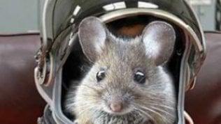 """Nati in Giappone i primi topi da spermatozoi """"spaziali"""""""