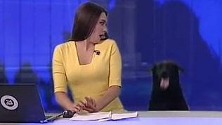 La sorpresa della conduttrice:il balzo del cane in diretta tv