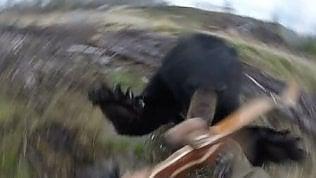Orso nero attacca il cacciatore:terrificante balzo in soggettiva