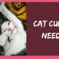 """Dublino, cercasi """"coccolatore"""" di gatti: la clinica assume accarezzatori di felini"""