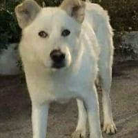 Cosenza, torturarono e impiccarono il cane Angelo: condannati i responsabili
