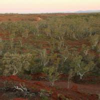 I satelliti scoprono foreste nascoste nelle zone aride: tutte insieme fanno