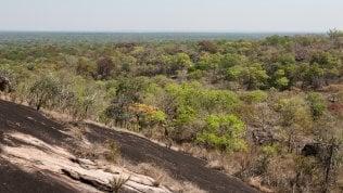 Dai satelliti le foreste nascoste nelle zone aride del pianeta