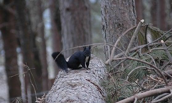 Montagna, boschi e rapaci: il fascino wild dell'Aspromonte