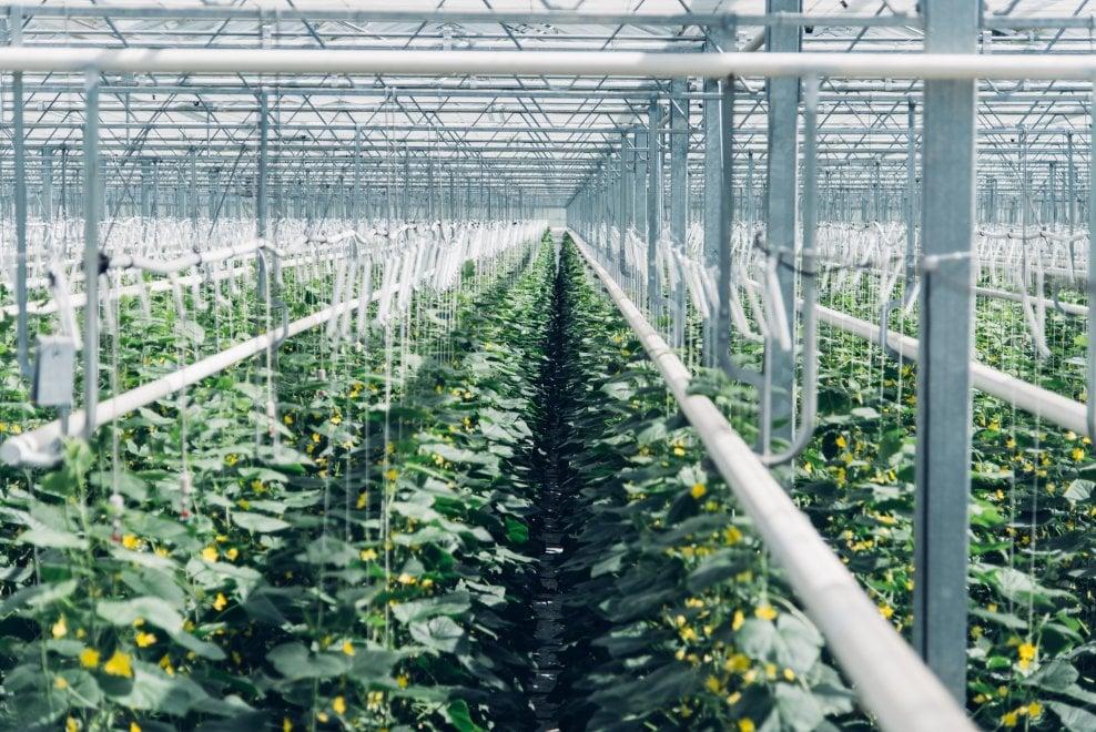 Svizzera: l'impianto che trasforma l'anidride carbonica in fertilizzante
