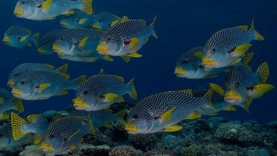 Gli oceani mai così minacciati dall'attività dell'uomo