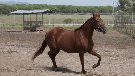 I cavalli sanno riconoscersi allo specchio  Forse sì - Repubblica.it eaf153cf6845