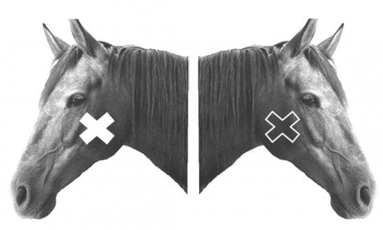 I cavalli sanno riconoscersi allo specchio? Forse sì