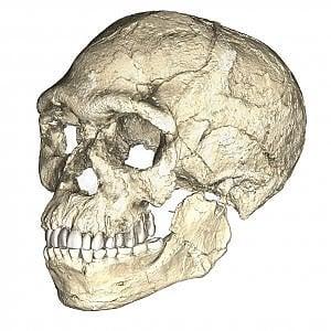 Più antichi i primi antenati dell'Homo sapiens