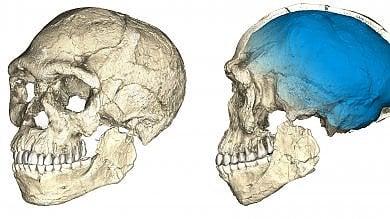 Gli antenati dell'Homo sapiens più antichi di 100mila anni /   Foto