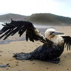 Alla Borsa piace la bioplastica che ripulisce il petrolio nel mare