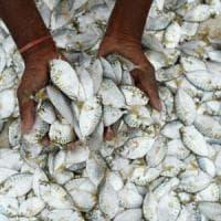 La pesca allo stremo: a rischio risorse ittiche nelle isole di Pacifico e Caraibi