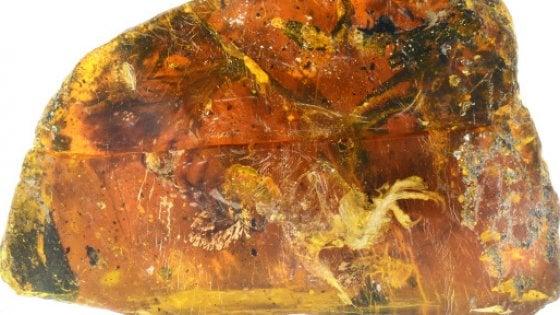 I segreti di un uccellino preistorico racchiusi nell'ambra