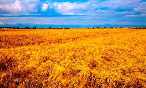 """In Puglia gli stati generali del pane: """"È nelle antiche sementi che germoglia il futuro"""""""