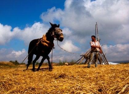 In Puglia gli stati generali del pane: