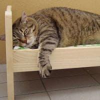 Ikea anche per animali: in autunno articoli per cani e gatti