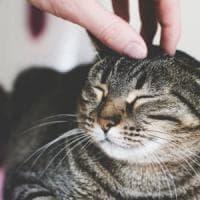 """Gatti, i """"ruffiani"""" ci piacciono di più. Ecco come scegliamo quale adottare"""