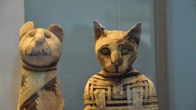 """Le origini del gatto domestico?   Foto   """"Si è fatto adottare già nell'età della pietra"""""""