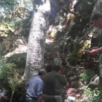 Cinque cuccioli di lupo morti in Abruzzo: si indaga sulle cause