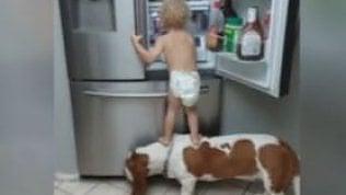 Il bimbo, il cane e la scalata al frigorifero con imprevisto