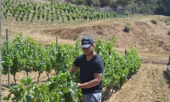 Da detenuti a viticoltori: Gorgona, il vino che fa bene
