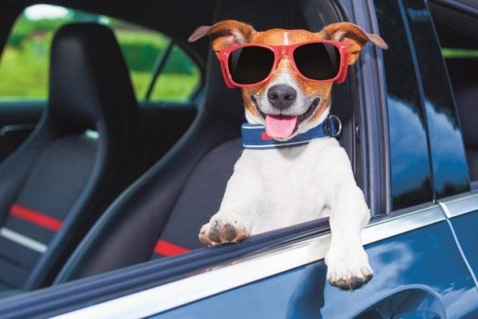 Sorpresa, ecco il deodorante per i cani in auto