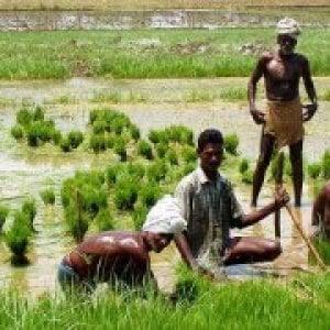 Africa, lo sviluppo che non giova: investimenti privati che impoveriscono i piccoli produttori locali