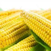 Il gigante Syngenta perde contro gli agricoltori del Missouri: maxi multa da 217 milioni...